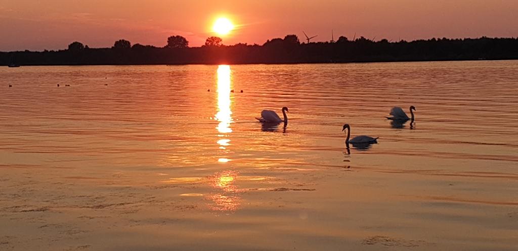Augustus 2020, warmste maand ooit, 37 gr, heerlijk kamperen in 'Nijkerk aan zee'. Wouj © BDU media