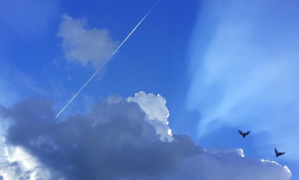 Een wolk voordat een bui losbarstte (en er toevallig een vliegtuig en twee vogels vlogen, dus niet in scene gezet of gemanipuleerd). Helen Witte © BDU Media