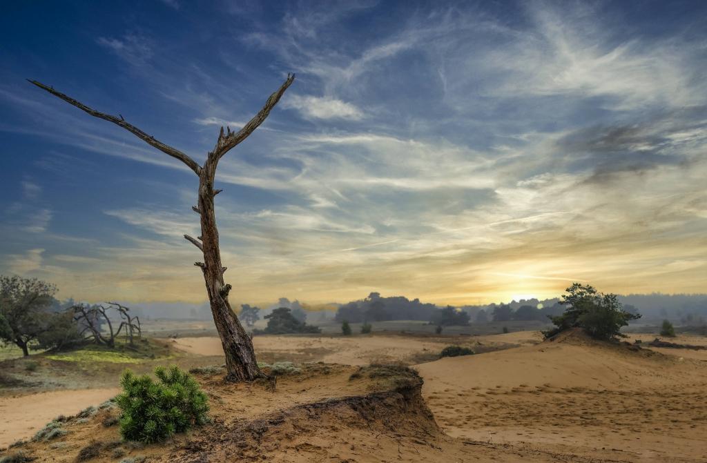 Zonsondergang op het Wekeromse zand.  Frank Rosier © BDU Media
