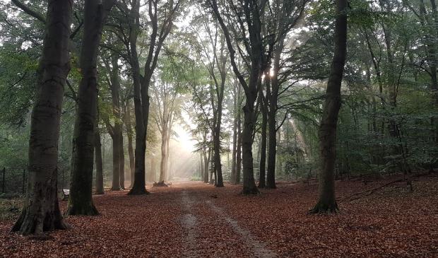 <p>Rust en stilte op Landgoed Kernhem in Ede.</p>
