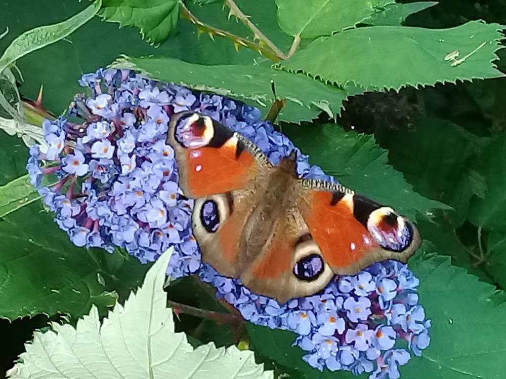 Deze foto vind ik heel bijzonder door de samenstelling van de kleuren en ook omdat het de pracht van de Nederlandse natuur laat zien. Deze foto is ook bijzonder voor mij omdat mijn dochter die heeft genomen en omdat ze oog voor het fotograferen heeft.   Joeri Brandenburg © BDU media
