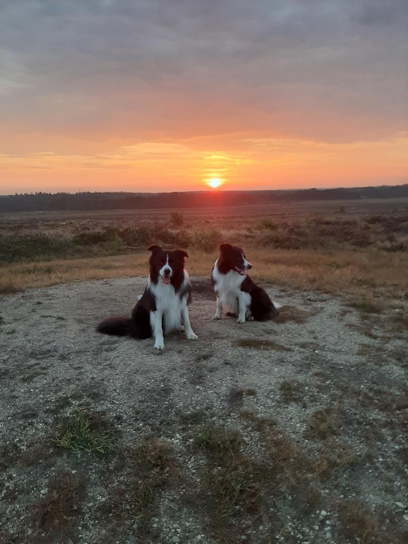 """Colien Noorlander: ,,Een prachtige zonsopkomst op de Edese heide met de bordercollie's Buck en Dax."""" Colien Noorlander © BDU Media"""