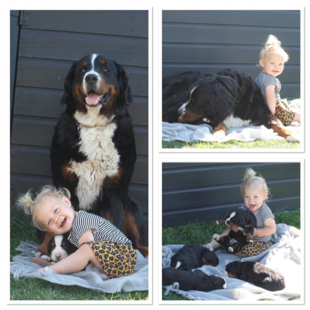 Op de foto staat Romee Evers uit Ederveen met haar vriendinnetje Donna, maar nu moet Romee de aandacht verdelen met 4 pups! Wat soms nog wel eens moeilijk is!  Gerline Evers © BDU Media