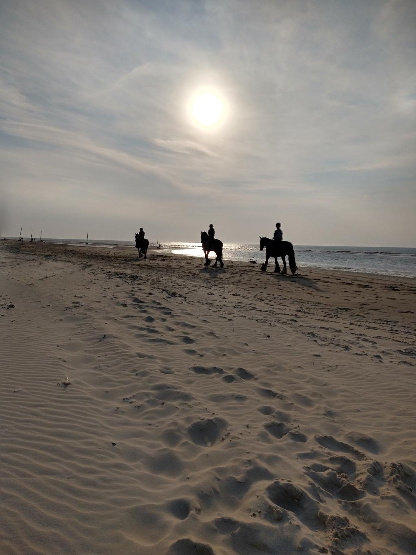 Paarden op het strand van Vlieland op 11 augustus. Petra Teunissen © BDU Media