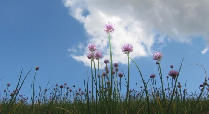 Bloemen en lucht