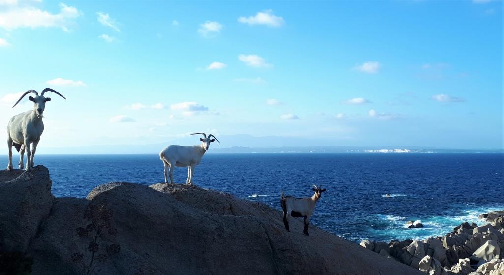 Noord Sardinië (Capo Testa) met uitzicht ook op het eiland Corsica. Jef Aarts © BDU media
