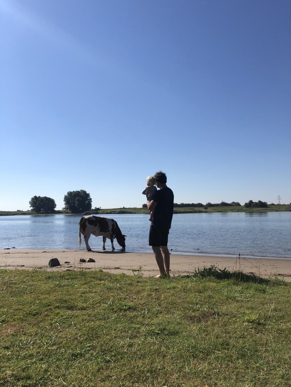 Een heerlijke ochtend, vrijdag 7 augustus, aan De Rijn. Net als wij zochten ook de koeien wat verkoeling. Mariët Korteweg © BDU Media