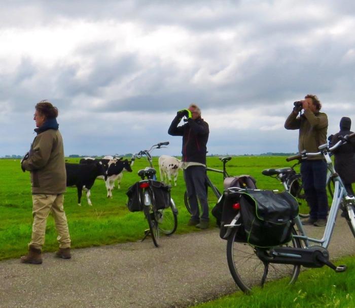 9De Koeien zien klaarblijkelijk totaal iets anders Onno Wijchers © BDU media