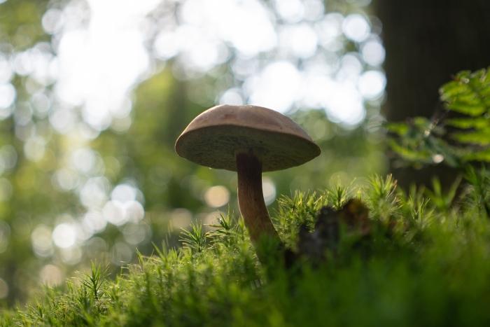 pas op voor teken in het bos Klaas Haitsma © BDU media