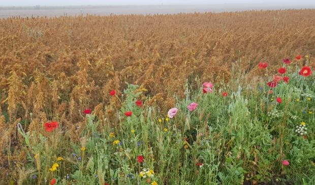 <p>De Grondkamer haalde een streep door het verbod op gebruik van bestrijdingsmiddel glyfosfaat op provinciale pachtgronden (foto ter illustratie)</p>