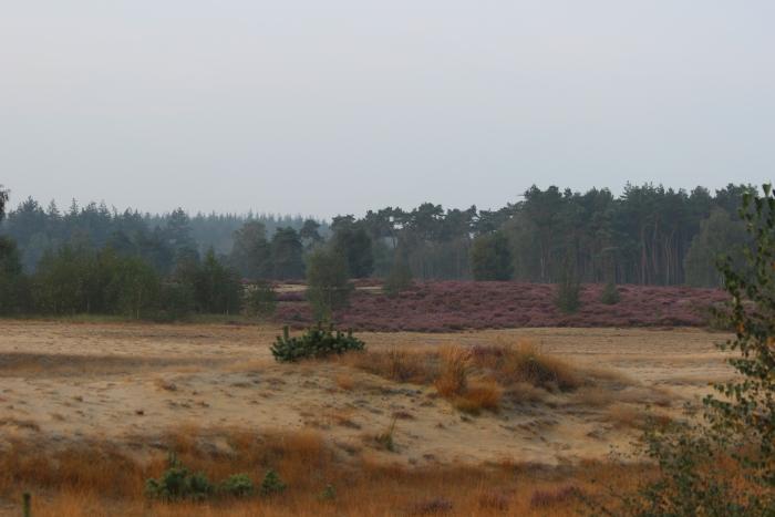 Heide op het Wekeromsezand  Elbert Brons © BDU Media