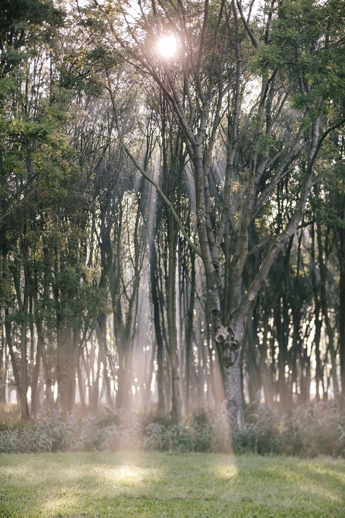 Prachtige ochtend, Avelingen in de mist Gyselle Blokland, Belle Fotografie © BDU Media