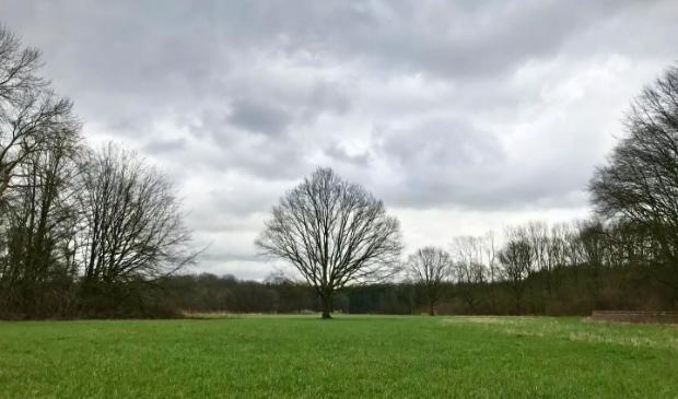 <p>De eikenboom in betere tijden.</p>