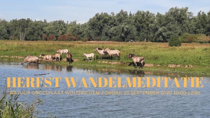 Koninkpaarden in natuur Groesplaat, Woudrichem