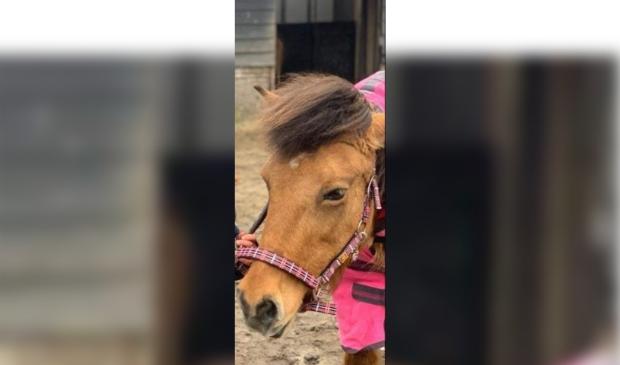 Noa <p>Pony Track Heemstede</p> © BDU media