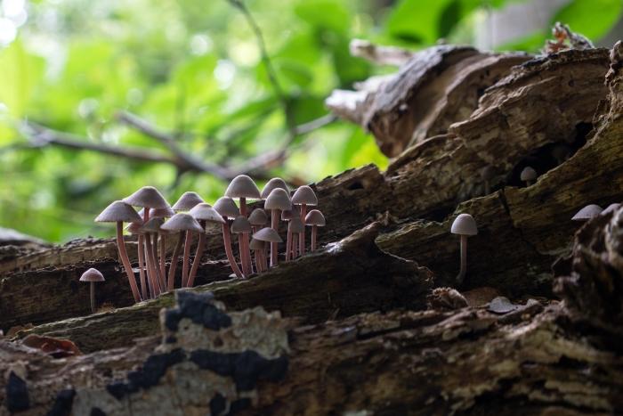 paddenstoelen achter huize Geerestein Klaas Haitsma © BDU media