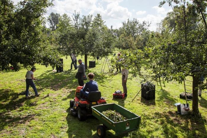 appels plukken op de Willemshoeve