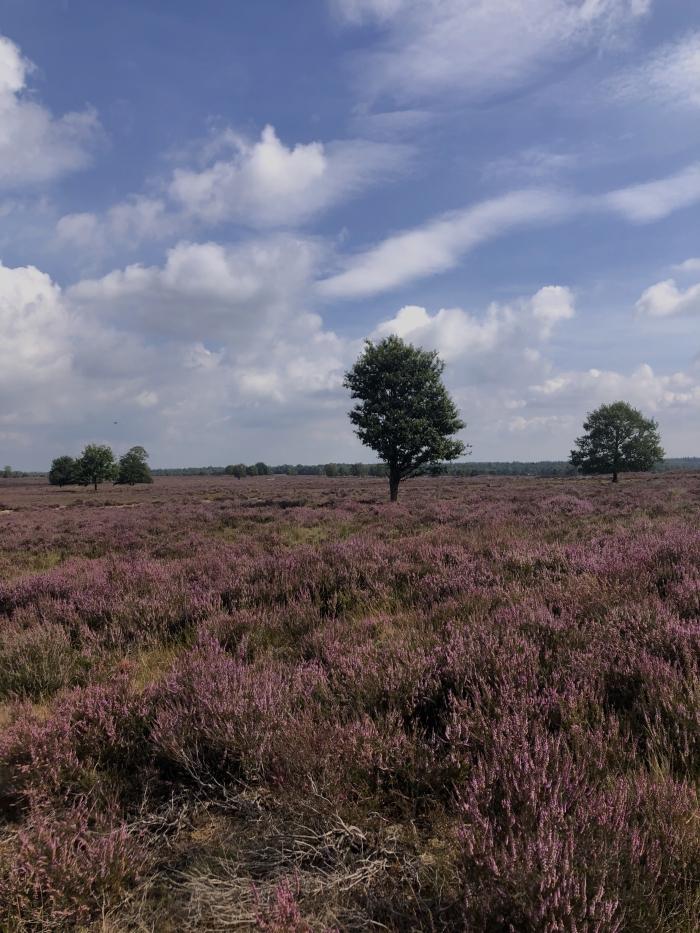 Ermelosche Heide