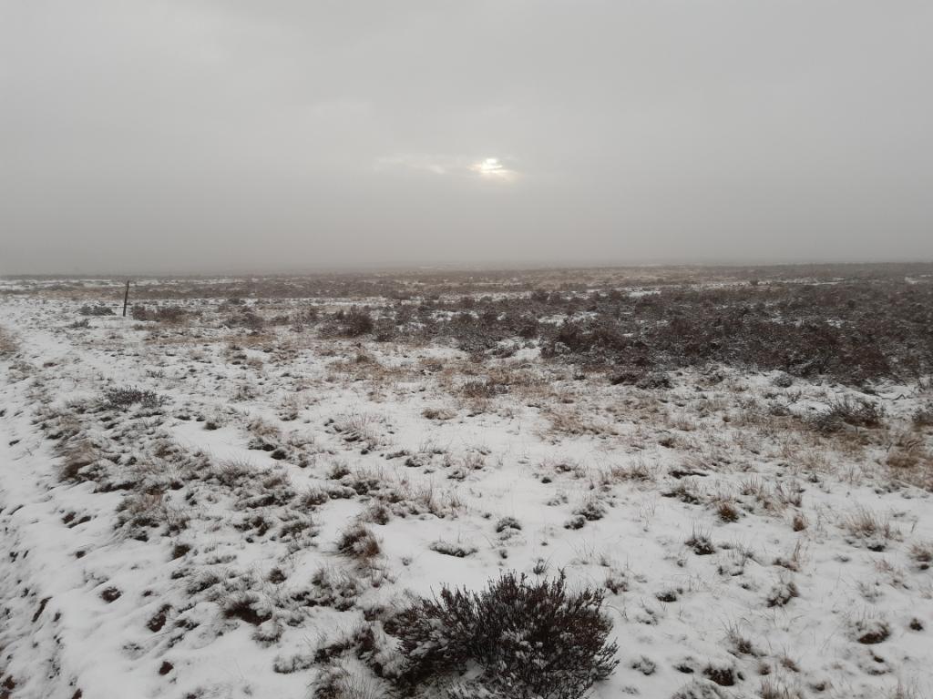 <p>De Ginkelse Heide, waar de sneeuw zondagmorgen alweer aan het smelten is.</p> Herbert Weustenenk © BDU Media