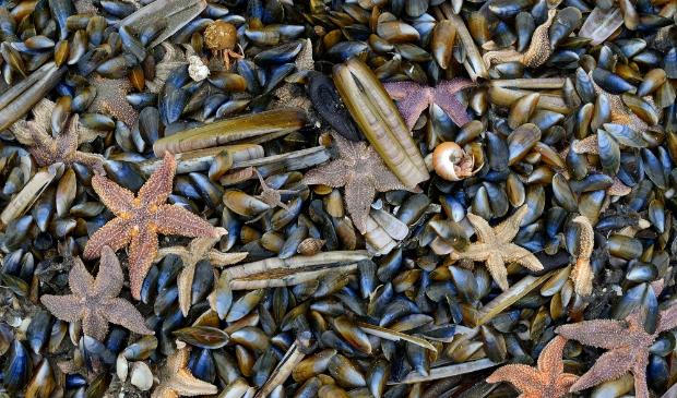 Strandleven. Ronald van Wijk © BDU media