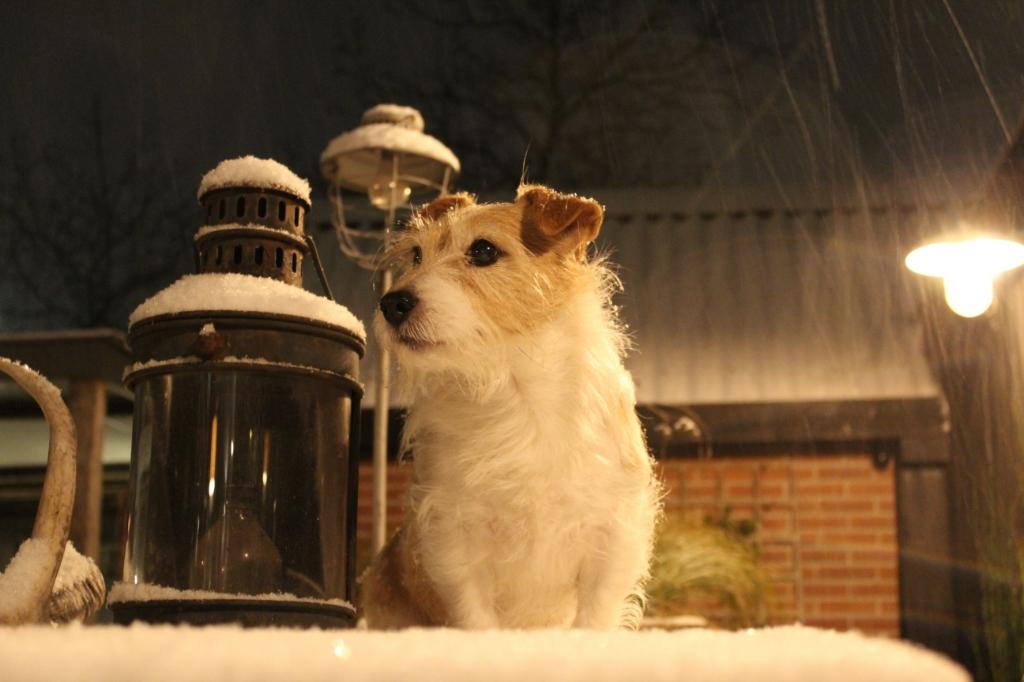 <p>Het hondje van Joyce Schneider uit Bennekom.</p> <p>Joyce Schneider</p> © BDU Media