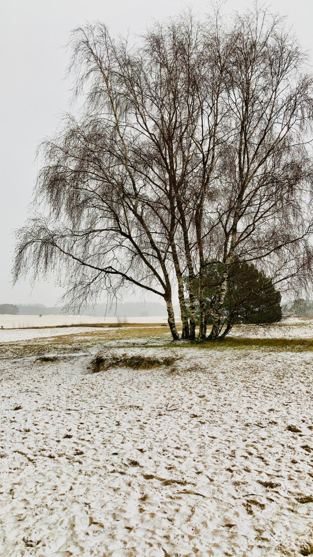 Isa Booden © BDU media
