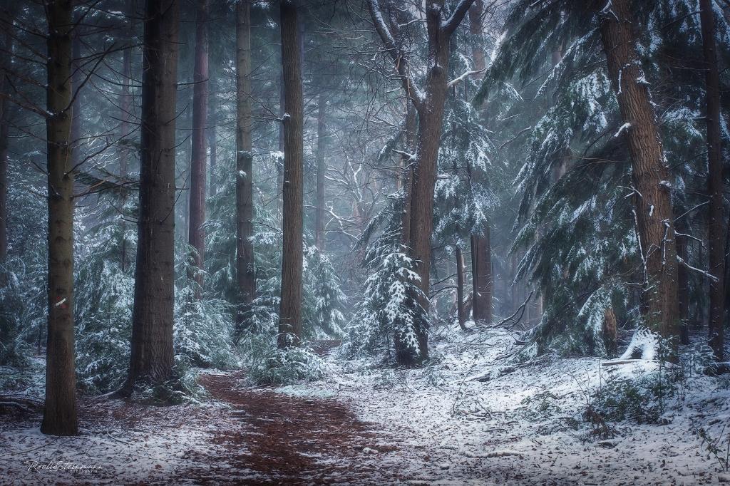 Sneeuw in het bos bij het Maarten Maartenshuis Roelie Steinmann © BDU
