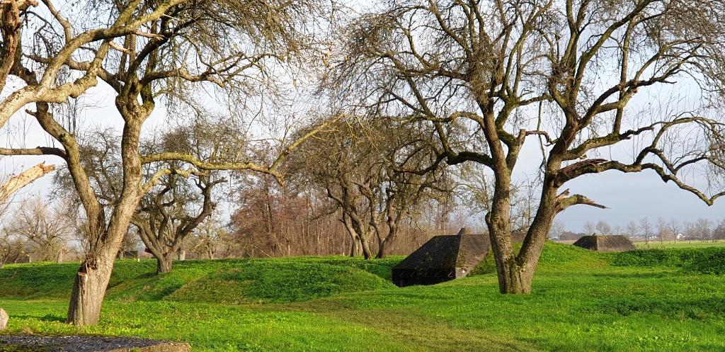 Bunkers en loopgraven aan Groeneweg, Schalkwijk Peer van Putten © BDU media
