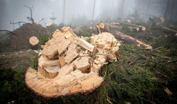 <p>,,Onze biogrondstoffen zijn afkomstig van grove takken, snoeihout en boomstronken&rsquo;&rsquo;, aldus Warmtebedrijf Ede.</p>