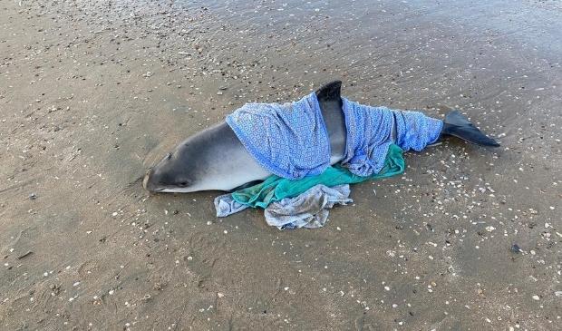 <p>De bruinvis werd op het strand nat gehouden met doeken.</p>
