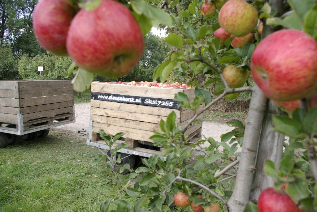 Pluk van appels Olmenhorst © BDU media