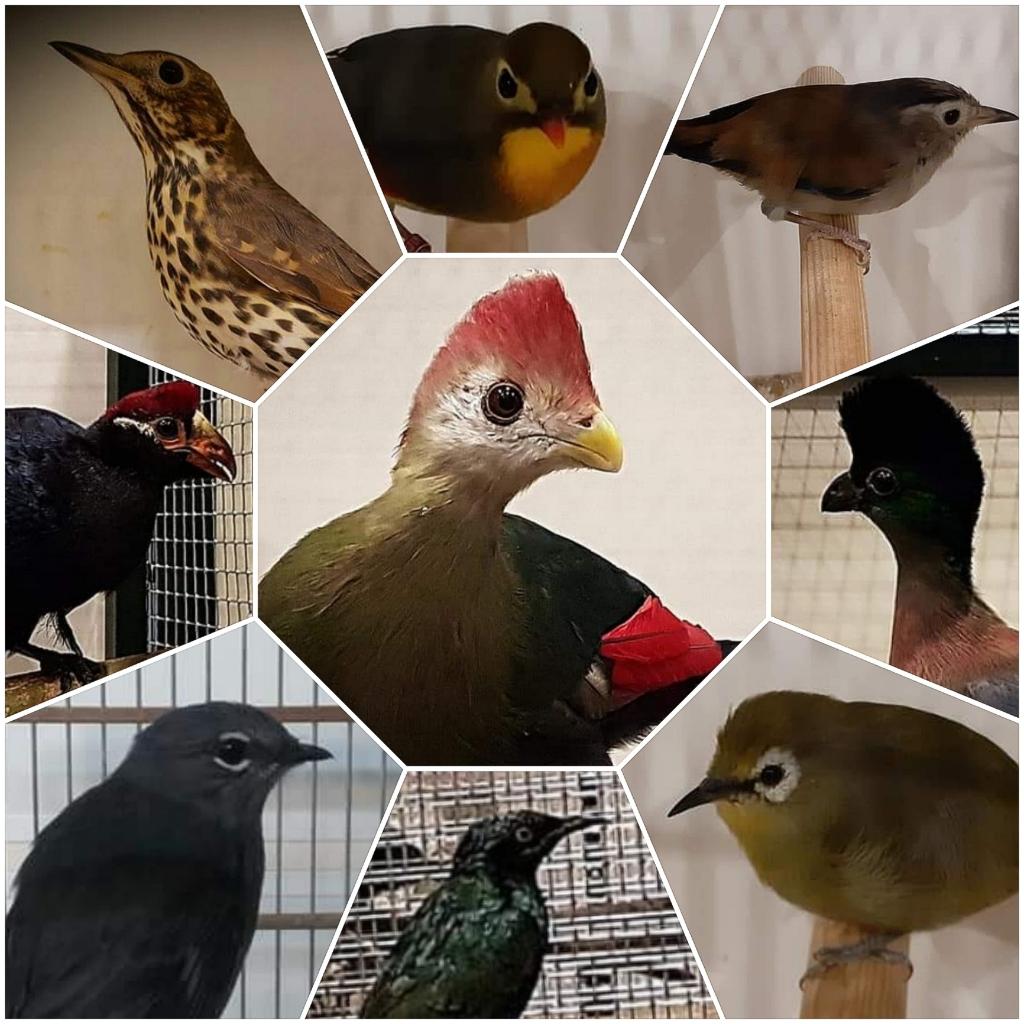 Vogels op de vogelshow v.v. Vogelvreugd © BDU media