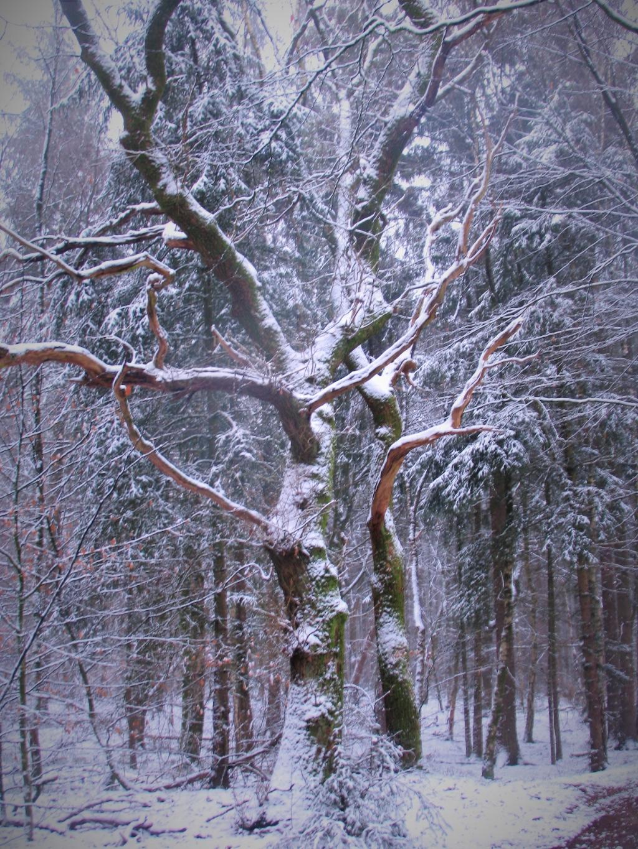De eerste sneeuw van 2021 gezien bij Garderen. Op 17 januari net voor zonsopgang. Waarom zou je nog schilderen..? Jaap Gerling © BDU media