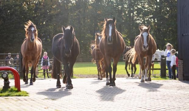 <p>Op de open dag van De Paardenkamp worden natuurlijk ook weer nieuwe gasten verwelkomd en voorgesteld.</p>