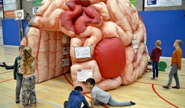 <p>Door in het brein te kruipen en hun eigen hersenen goed te gebruiken kregen de kinderen zicht op wat er in het hoofd gebeurt</p>