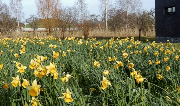 <p>Lentesferen in de buurt van De Fruittuinen.</p>