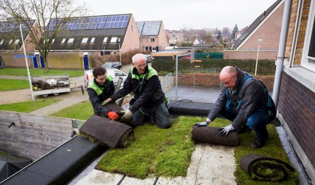 Wethouder Spek legt groen dak