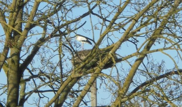 <p>De ooievaar is terug op zijn nest</p>