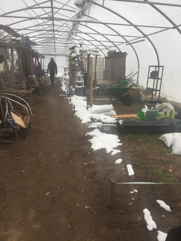 Sneeuw in de kassen van moestuinen het Aardse Paradijs in Achterveld: 'Zelfs binnen ligt er sneeuw'. Karin van Hamersveld © BDU media
