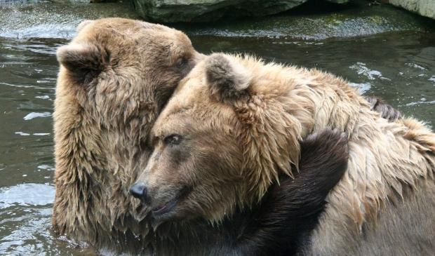 Tweelingbroertjes Peppie (voor) en Kokkie (achter) (2009).