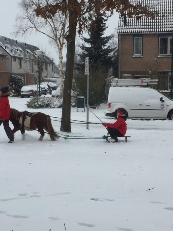 Sneeuwpret in Achterveld Karin van Hamersveld © BDU media