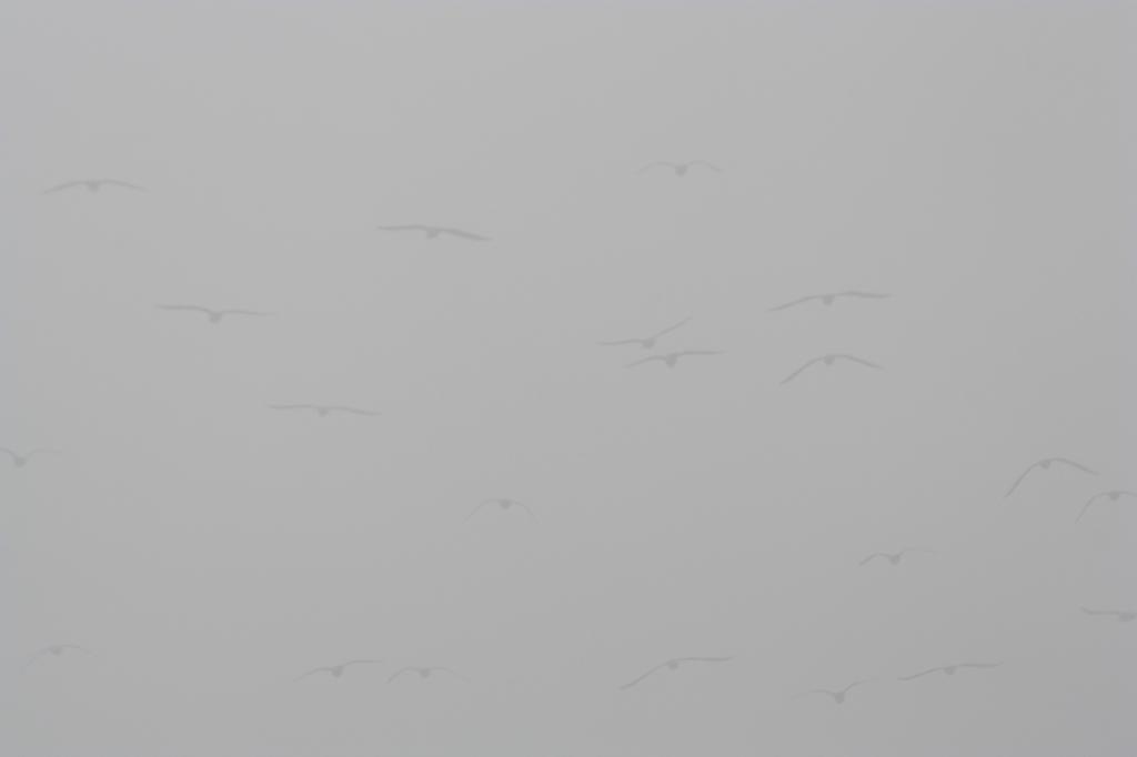 Vogels in de mist J. Jansen © BDU media