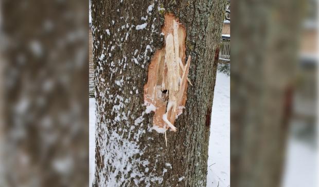 <p>Een mooie oude eikenboom is moedwillig beschadigd</p>
