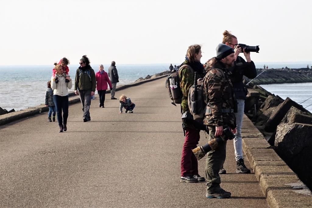 Zuidpier Han Blomvliet © BDU media