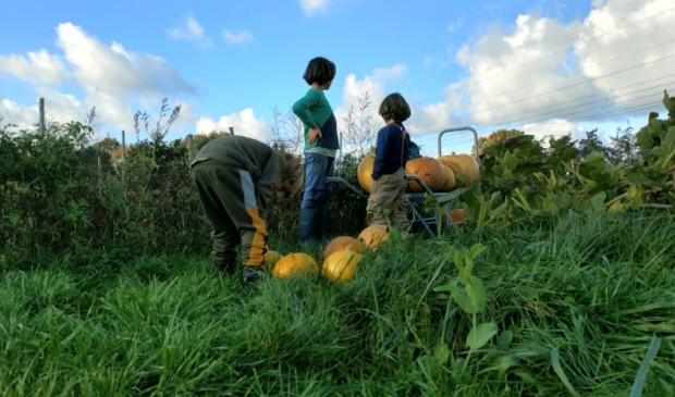 kinderen oogsten pompoenen bij De Wilde Peen