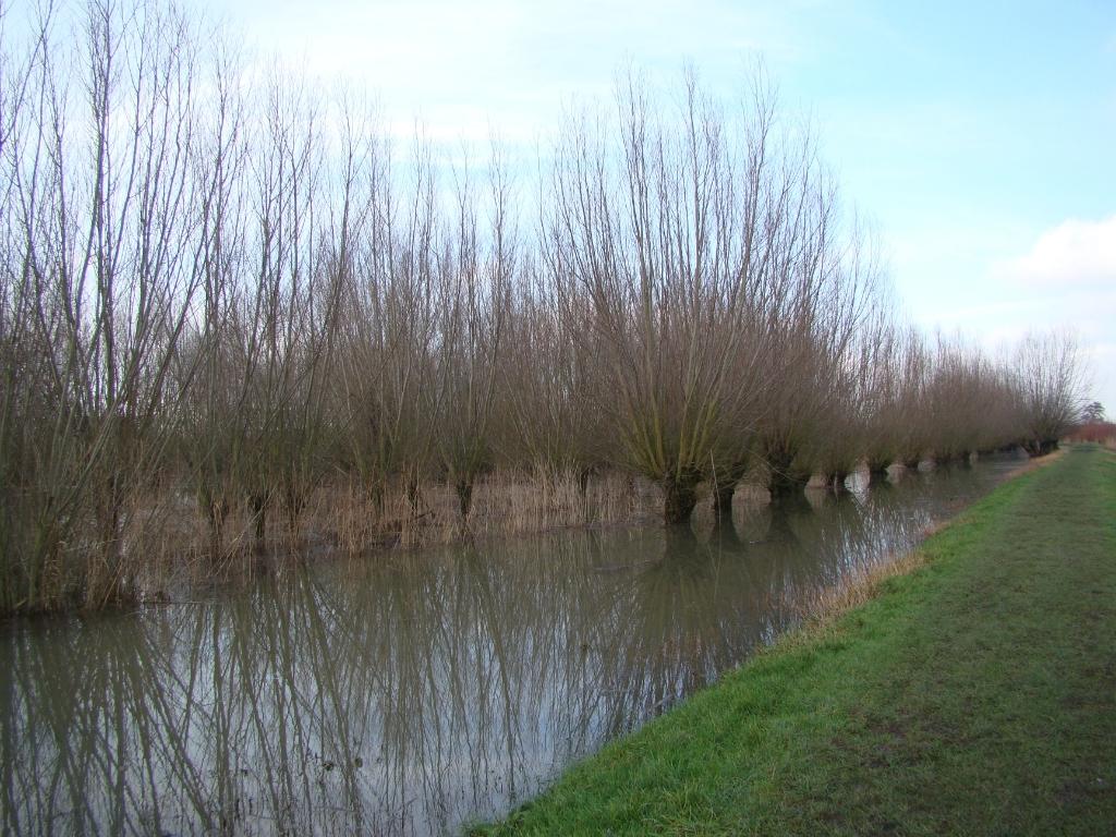 Hog water in de Avelingen Gerwin Goedhart © BDU media