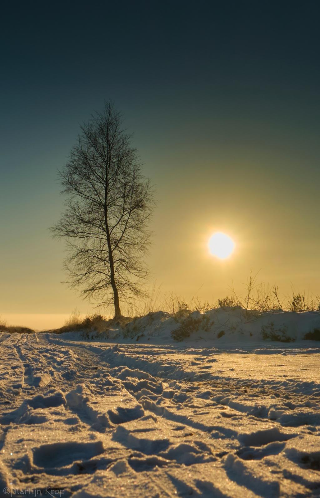 """Martijn Krop: ,,Vanmorgen ben ik in de vrieskou een rondje gaan lopen op de Sysstelt - Ginkelse Hei. De zon kwam mooi op en zorgde voor mooi plaatjes."""" Martijn Krop                                                                                                                                 © BDU Media"""