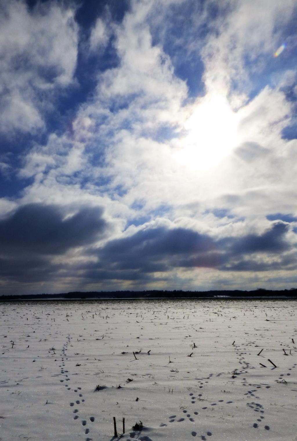 Landschap Hessenweg Linda Versteegen © BDU Media