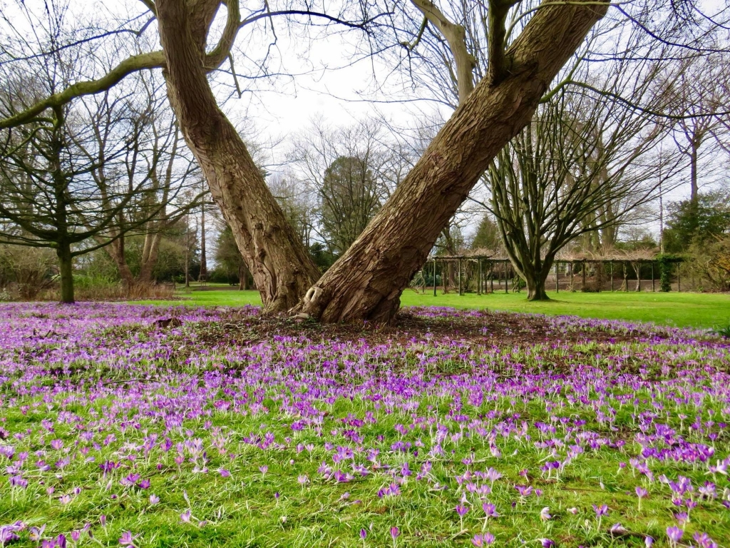 Beschut onder de oude Bomen Onno Wijchers © BDU media