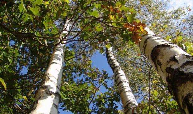 Provincie deelt bomen uit